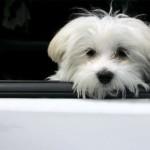 547317_waiting_little_dog